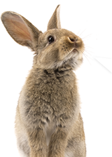 Animal Surrender & Re-Homing | Wisconsin Humane Society